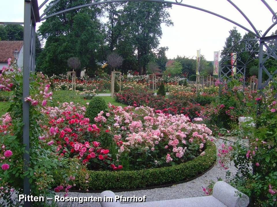Pitten – Rosengarten im Pfarrhof