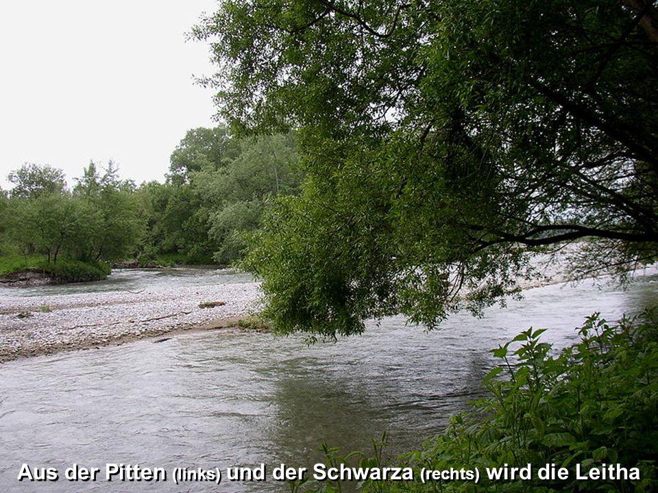 Aus der Pitten (links) und der Schwarza (rechts) wird die Leitha