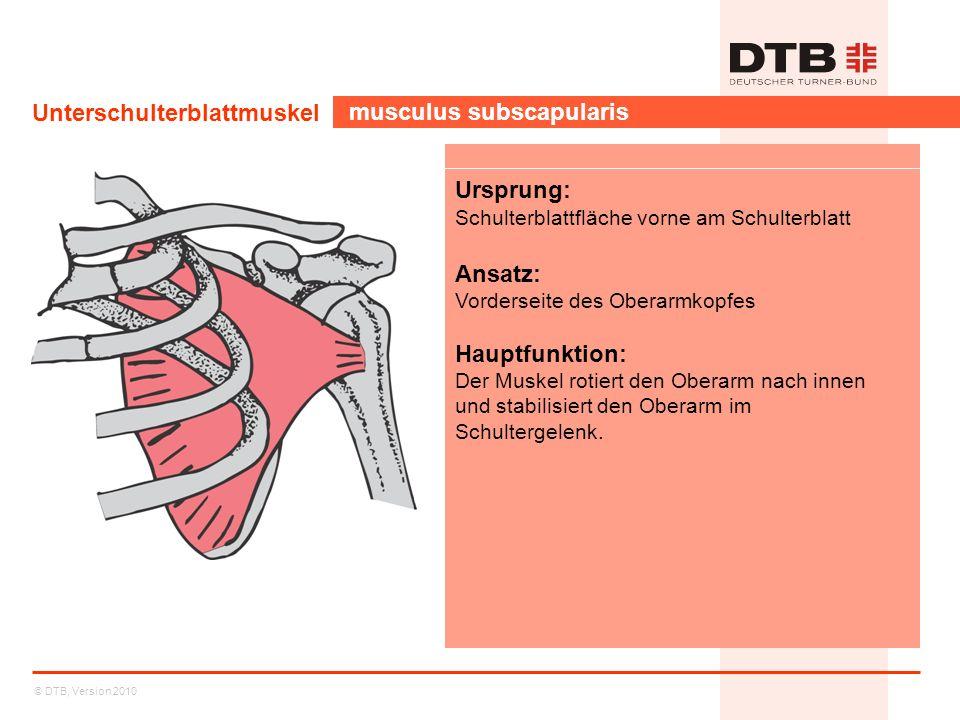 Unterschulterblattmuskel musculus subscapularis