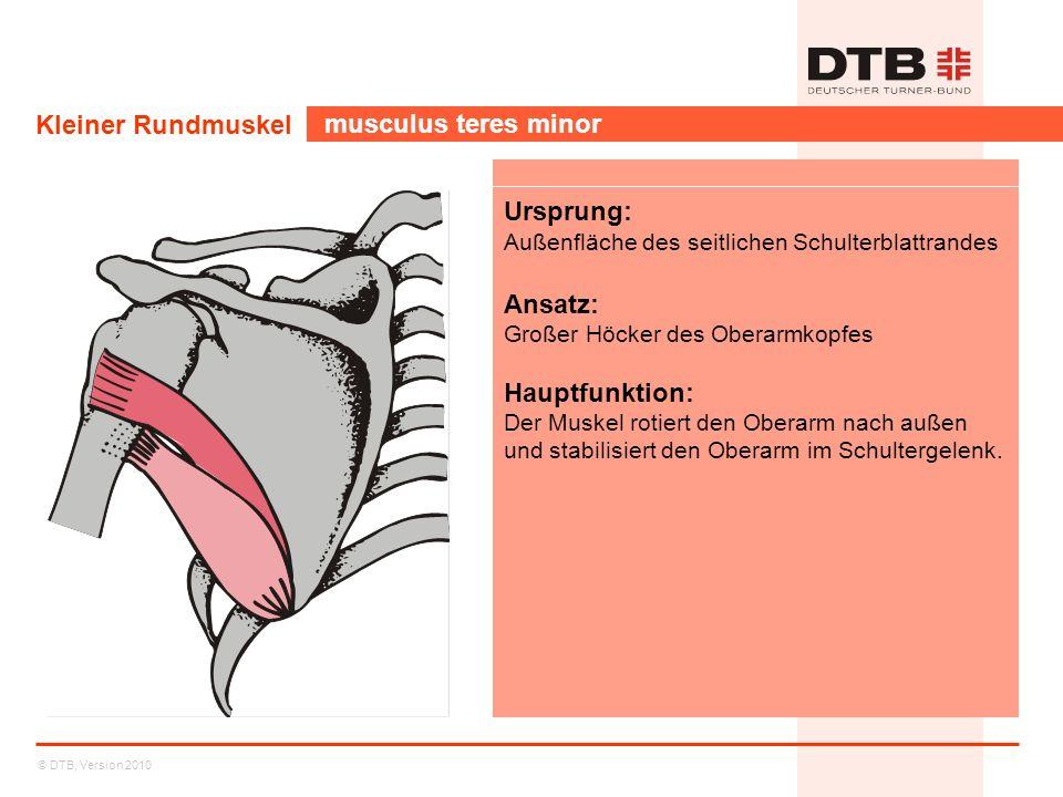 Kleiner Rundmuskel musculus teres minor Ursprung: Ansatz: