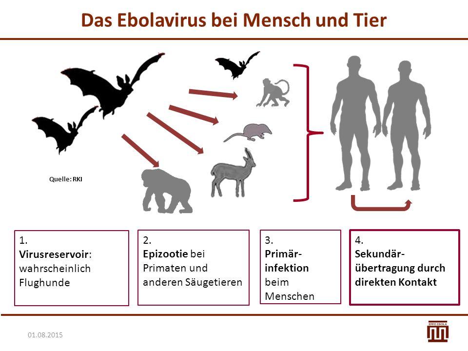 Das Ebolavirus bei Mensch und Tier