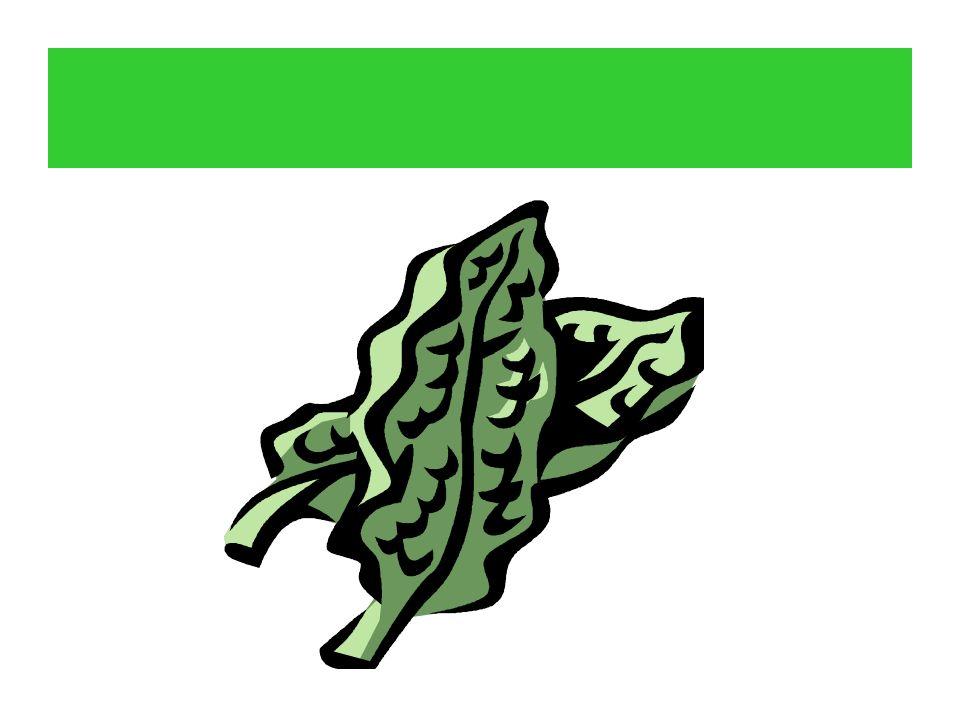Der Spinat