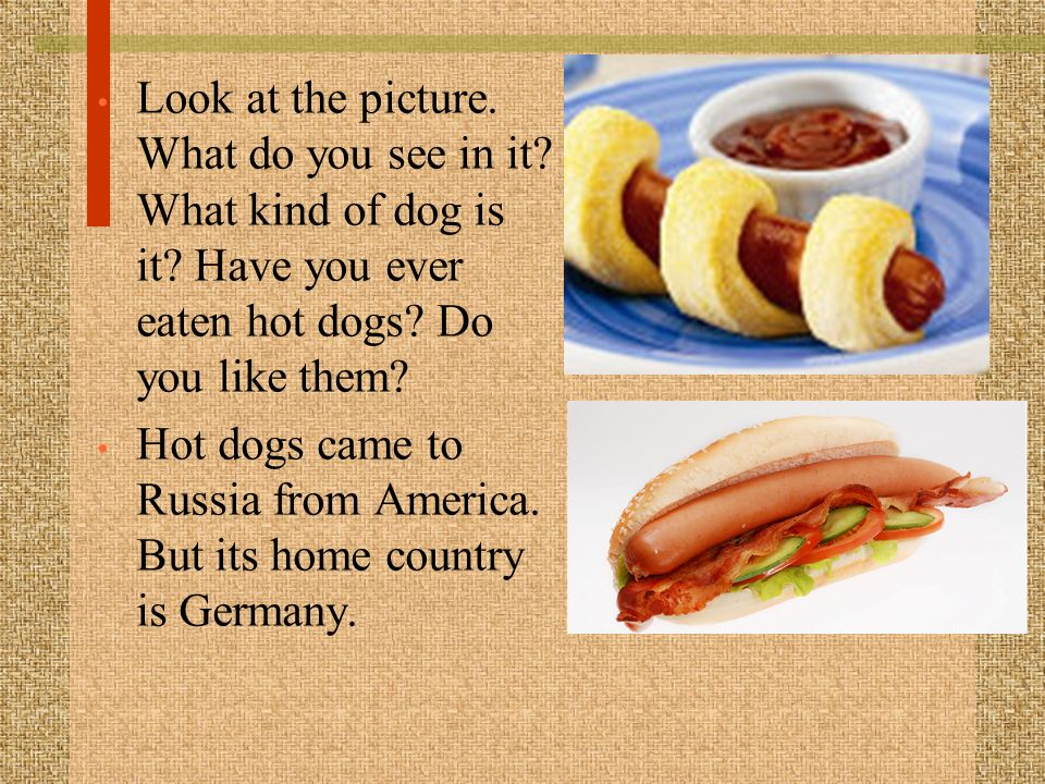 Look at the picture. What do you see in it. What kind of dog is it