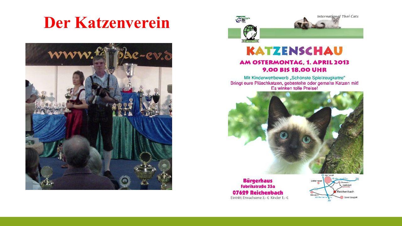 Der Katzenverein