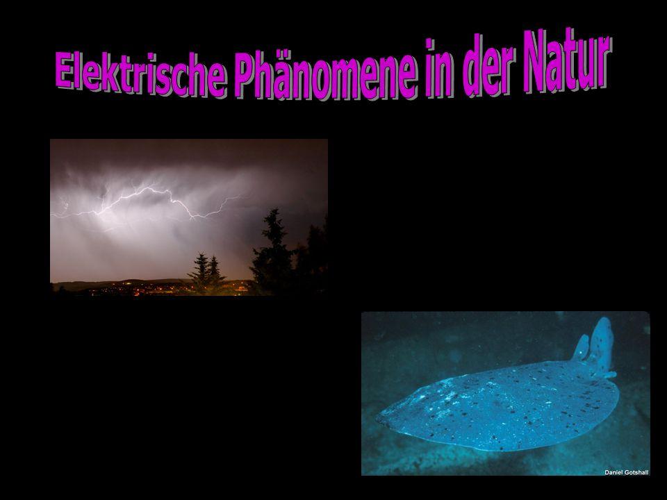 Elektrische Phänomene in der Natur