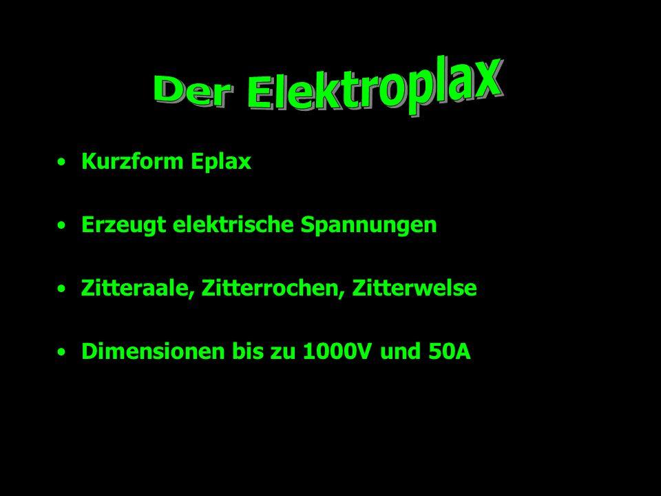 Der Elektroplax Kurzform Eplax Erzeugt elektrische Spannungen