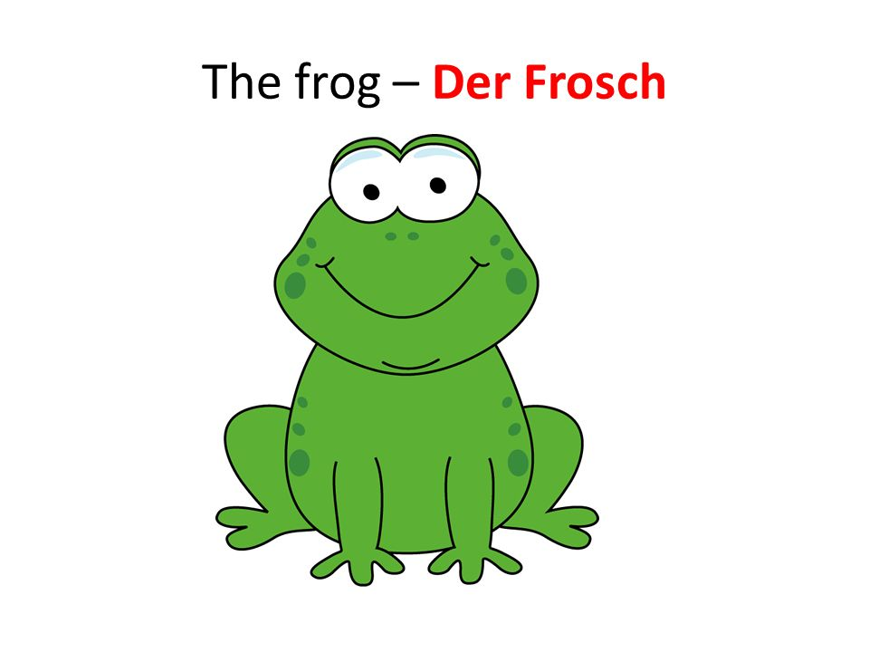 The frog – Der Frosch