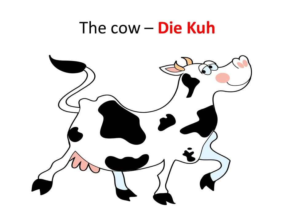 The cow – Die Kuh