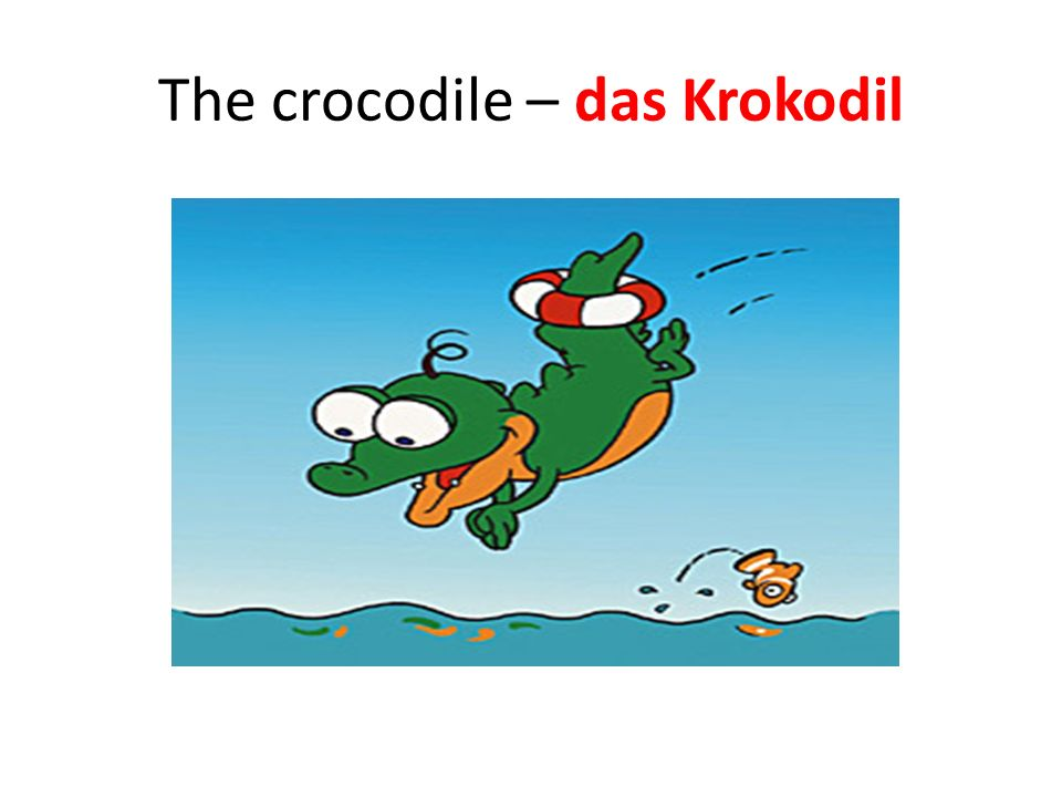 The crocodile – das Krokodil