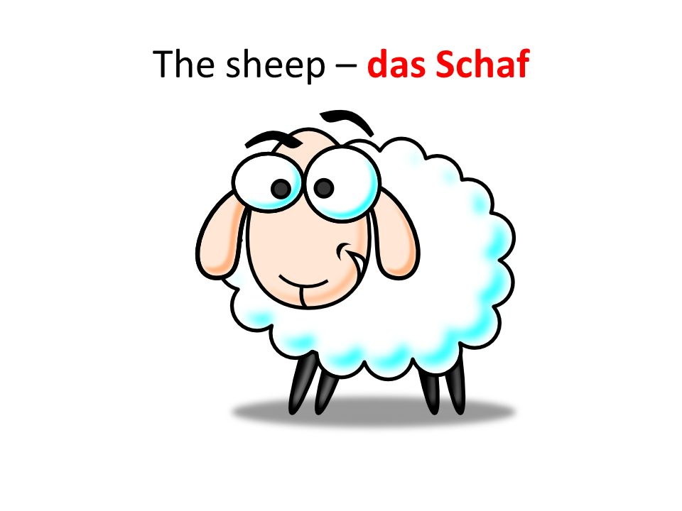 The sheep – das Schaf