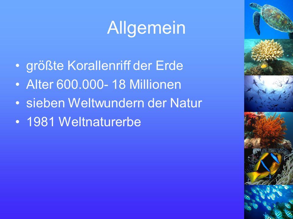 Allgemein größte Korallenriff der Erde Alter 600.000- 18 Millionen