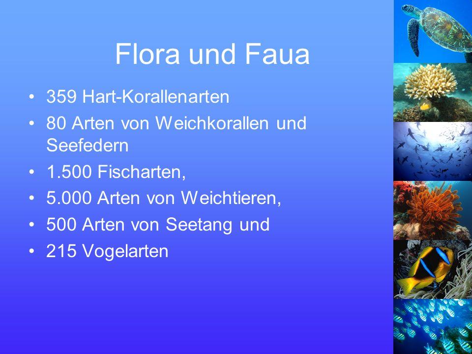 Flora und Faua 359 Hart-Korallenarten