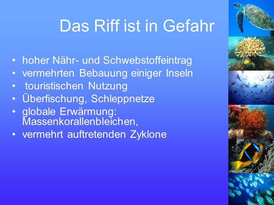 Das Riff ist in Gefahr hoher Nähr- und Schwebstoffeintrag