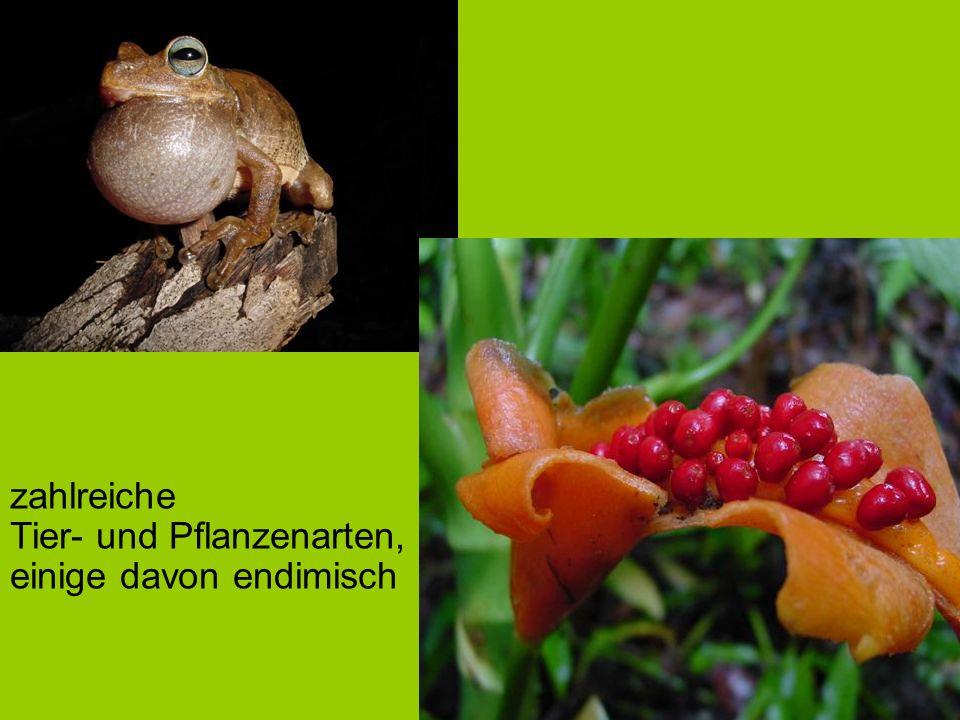 zahlreiche Tier- und Pflanzenarten, einige davon endimisch