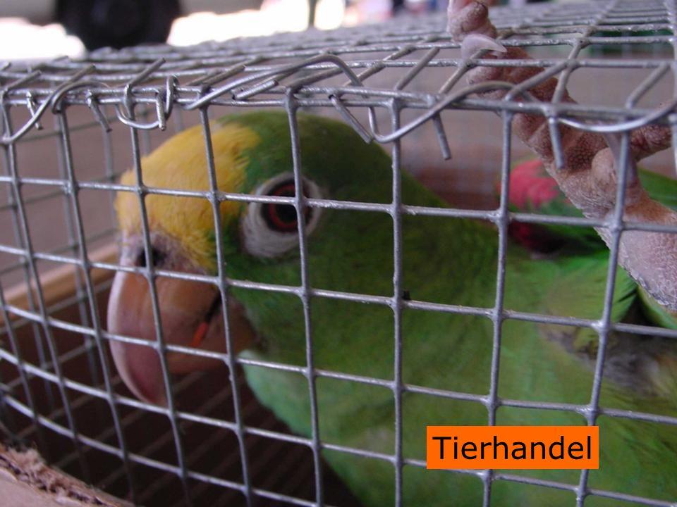 Tierhandel