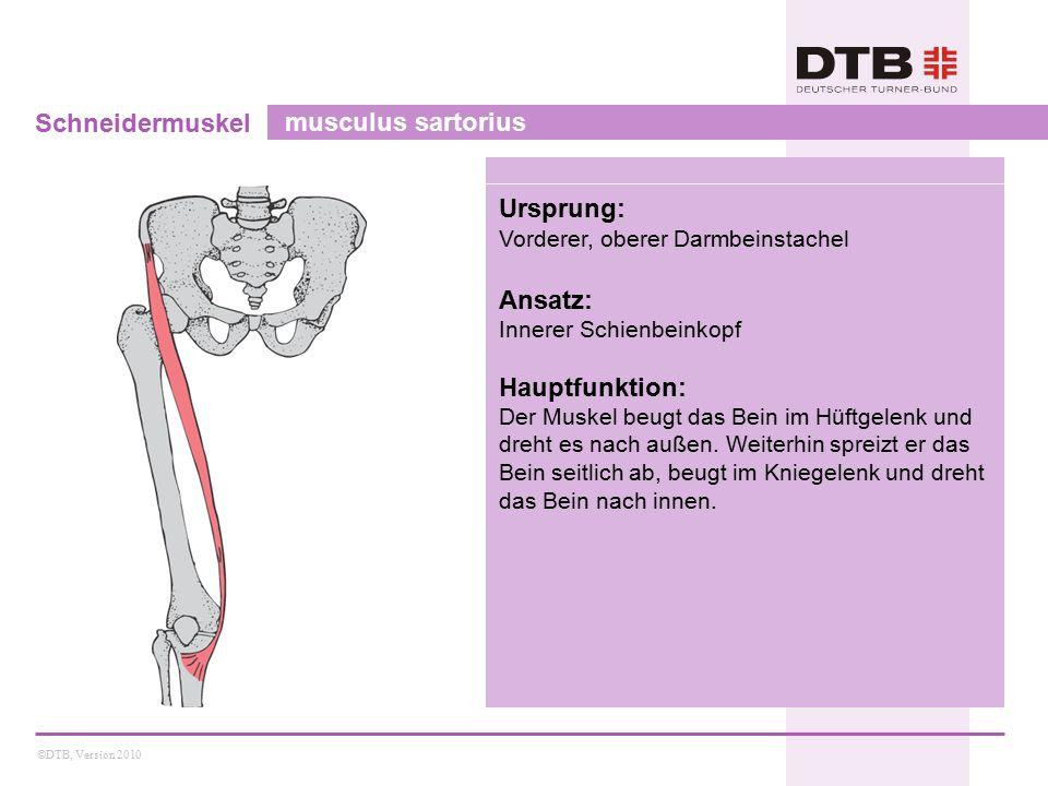 Schneidermuskel musculus sartorius Ursprung: Ansatz: Hauptfunktion:
