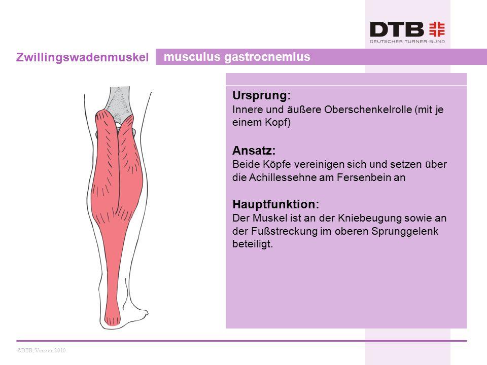 Zwillingswadenmuskel musculus gastrocnemius