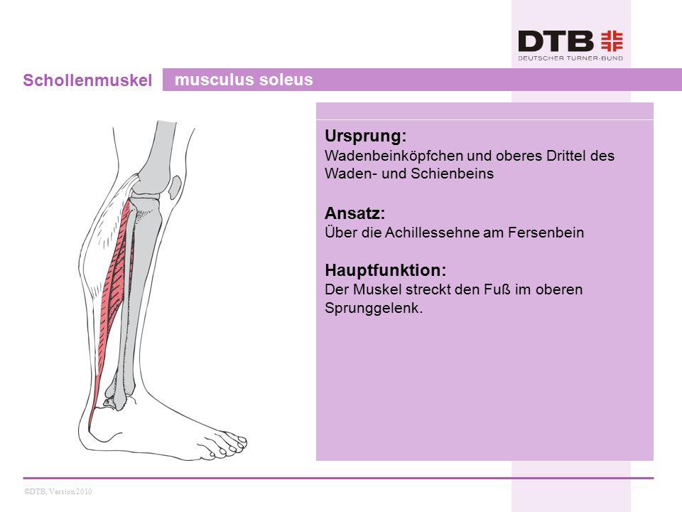 Schollenmuskel musculus soleus Ursprung: Ansatz: Hauptfunktion: