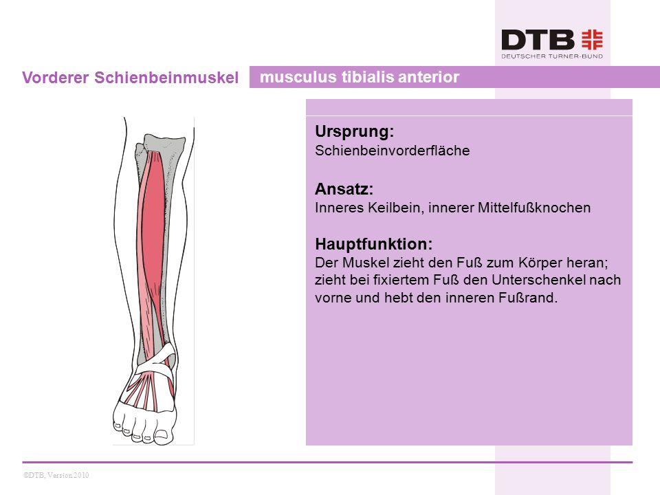 Vorderer Schienbeinmuskel musculus tibialis anterior