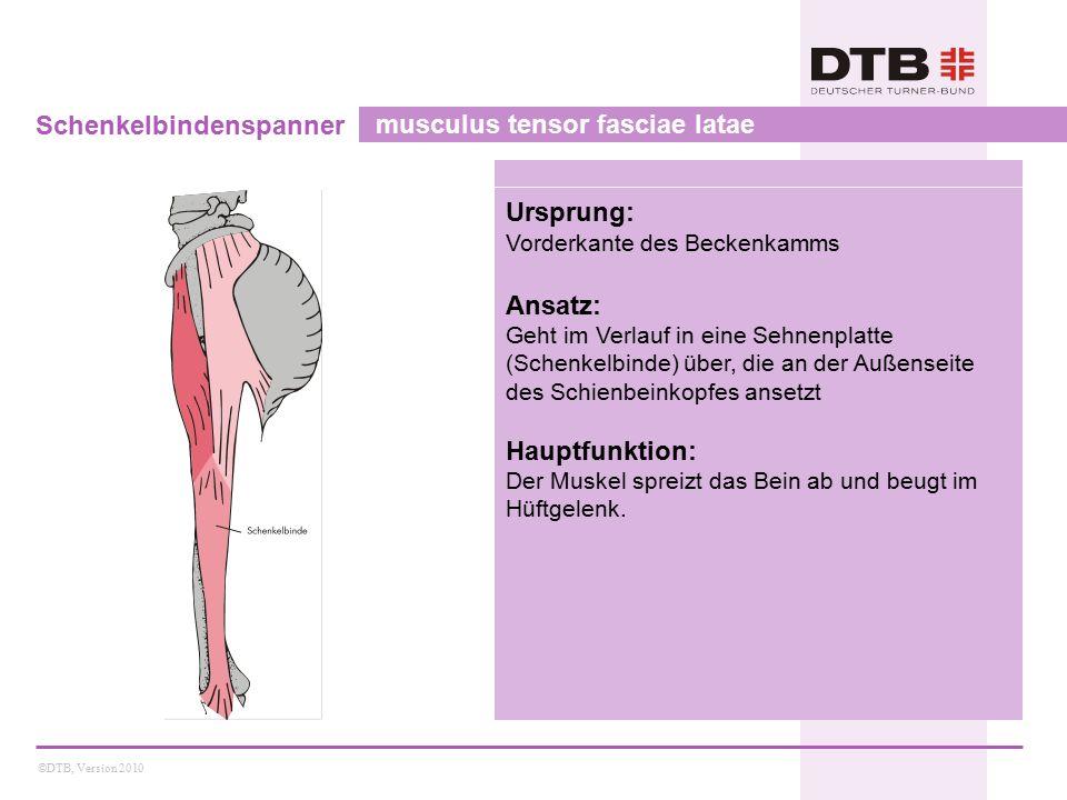 Schenkelbindenspanner musculus tensor fasciae latae