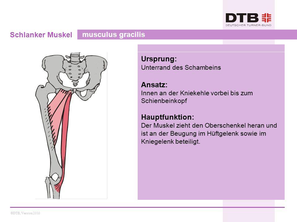 Schlanker Muskel musculus gracilis Ursprung: Ansatz: Hauptfunktion: