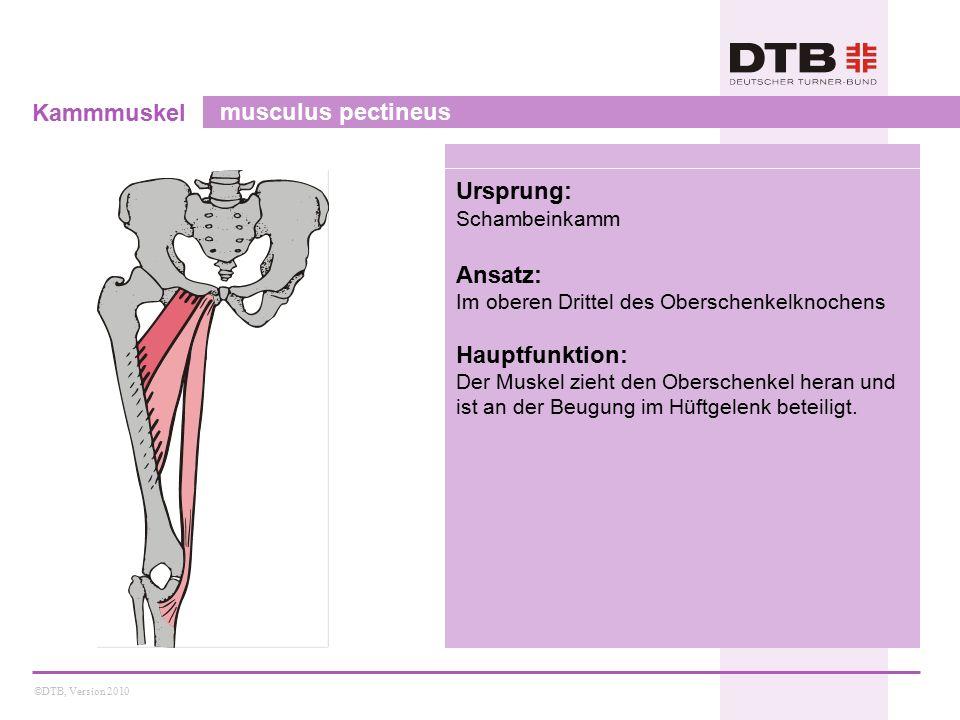 Kammmuskel musculus pectineus Ursprung: Ansatz: Hauptfunktion: