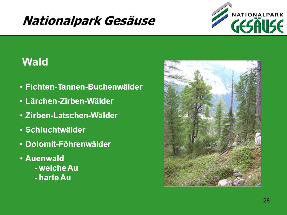 Nationalpark Gesäuse Wald Fichten-Tannen-Buchenwälder
