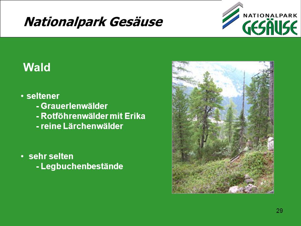 Nationalpark Gesäuse Wald