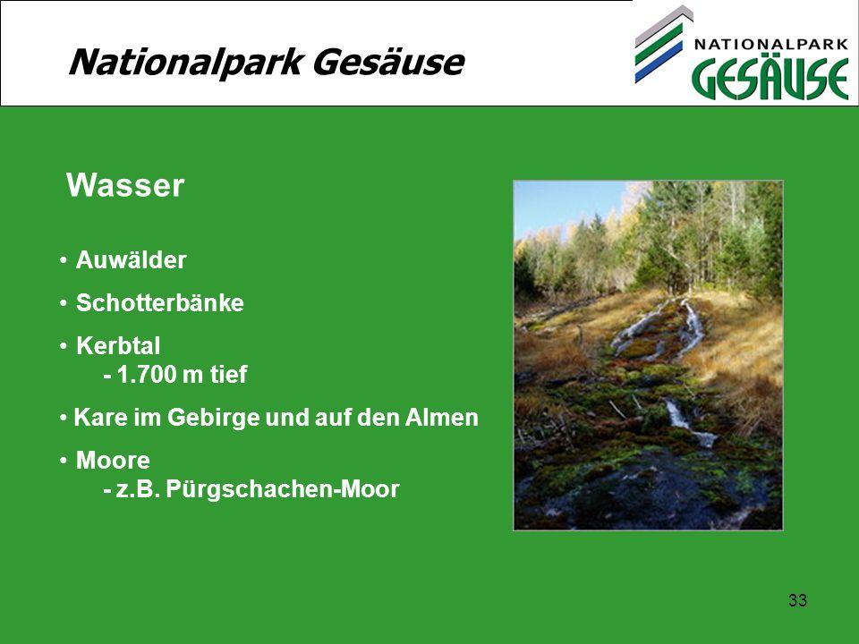 Nationalpark Gesäuse Wasser Auwälder Schotterbänke