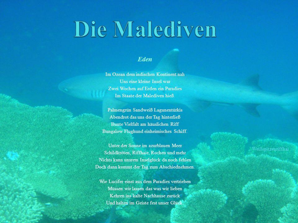 Die Malediven Eden Im Ozean dem indischen Kontinent nah