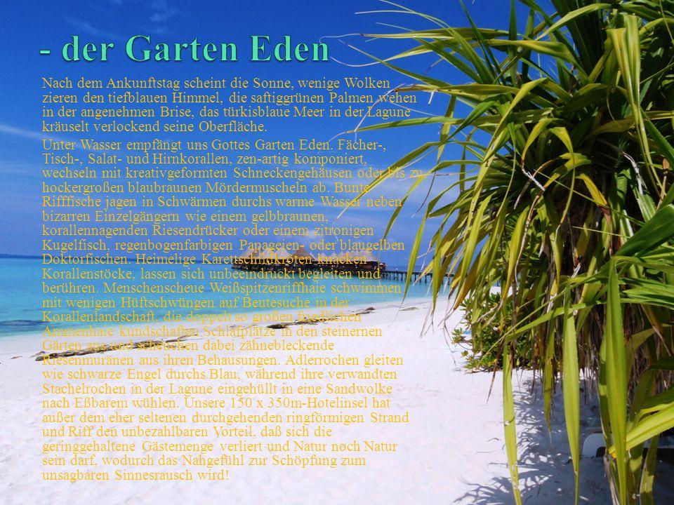 - der Garten Eden