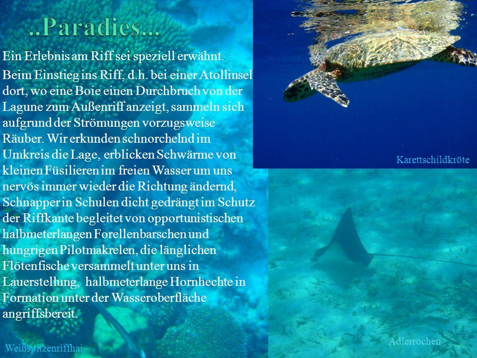 ..Paradies... Ein Erlebnis am Riff sei speziell erwähnt.
