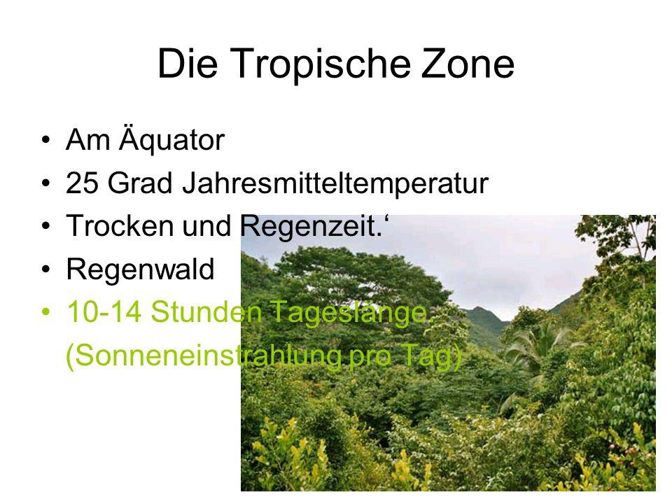 Die Tropische Zone Am Äquator 25 Grad Jahresmitteltemperatur