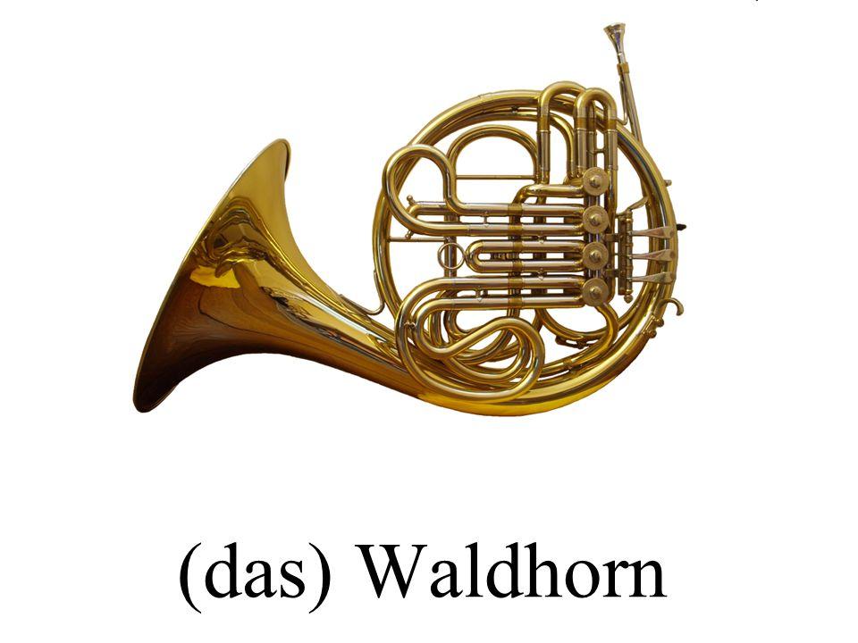 (das) Waldhorn