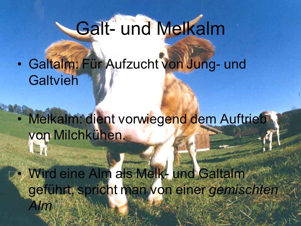 Galt- und Melkalm Galtalm: Für Aufzucht von Jung- und Galtvieh