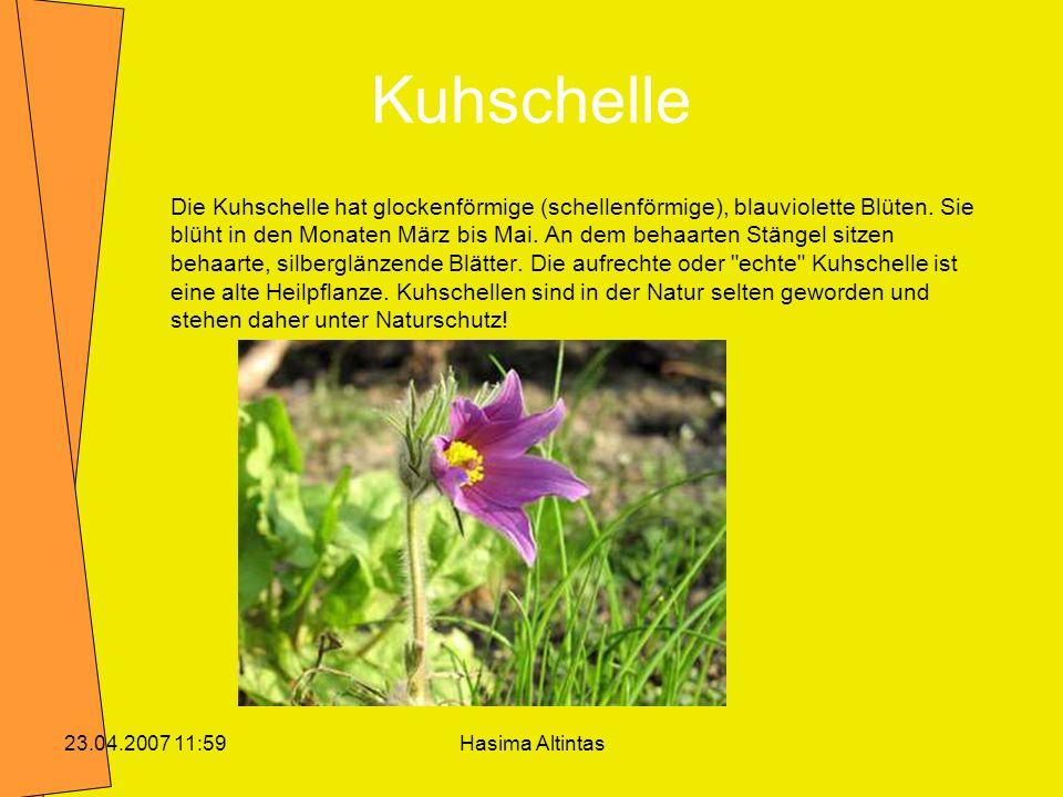 Kuhschelle