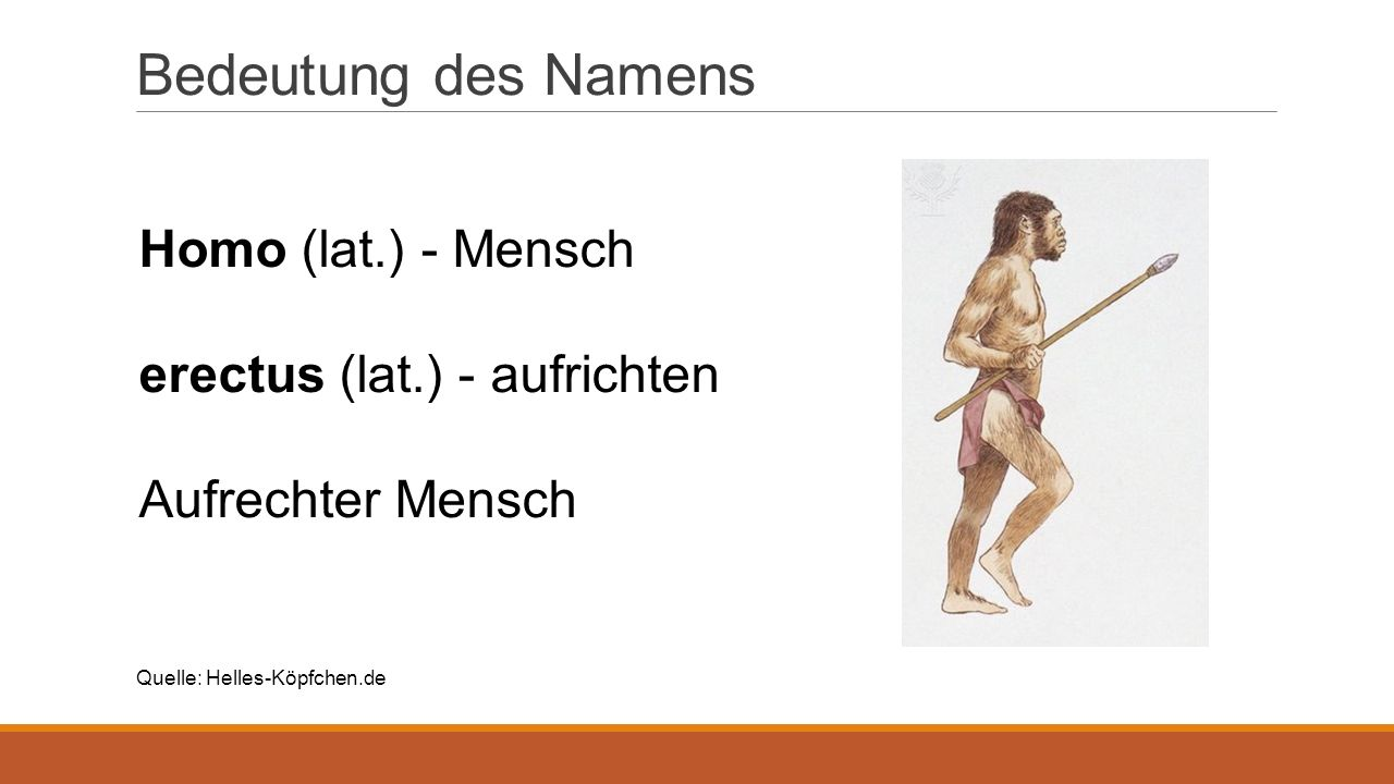 Bedeutung des Namens Homo (lat.) - Mensch erectus (lat.) - aufrichten