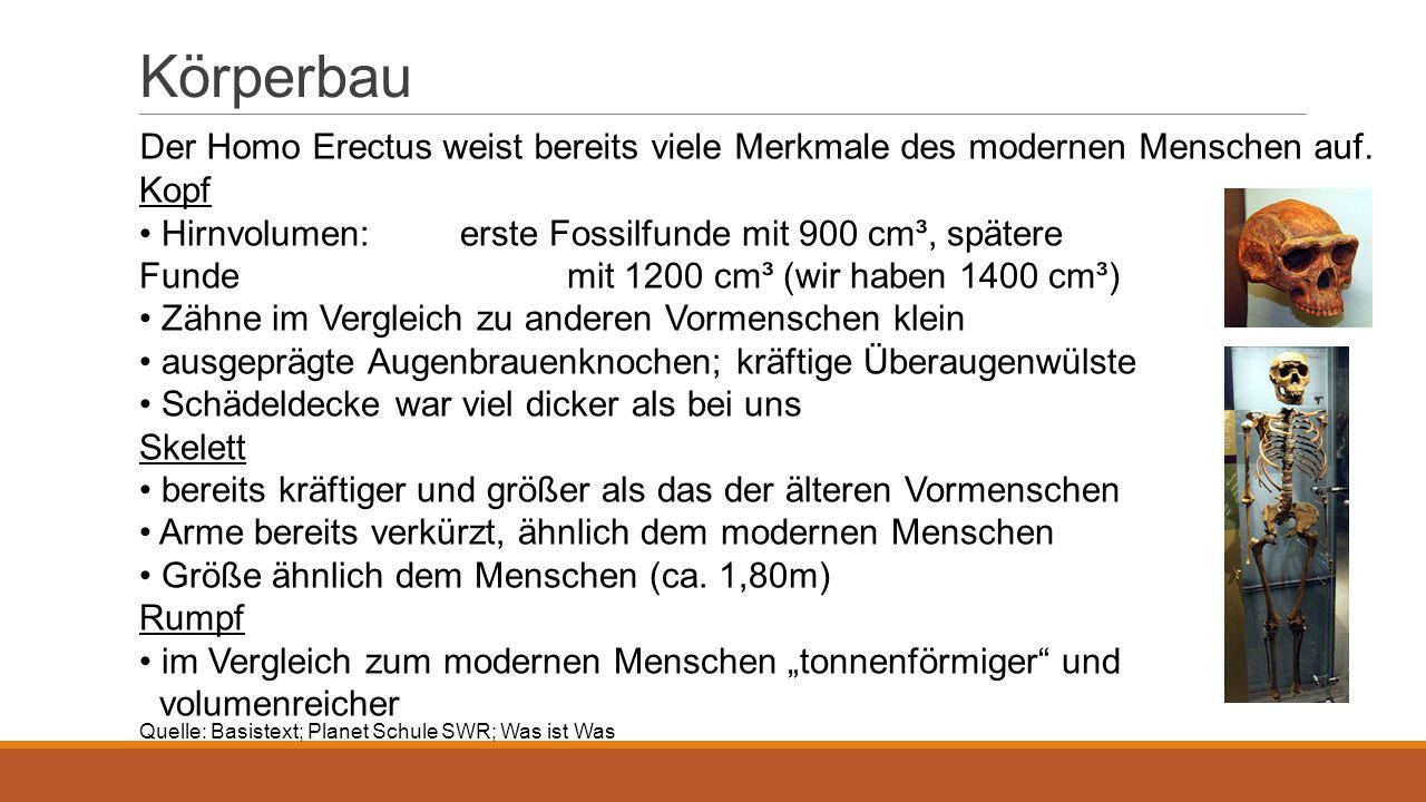 Körperbau Der Homo Erectus weist bereits viele Merkmale des modernen Menschen auf. Kopf.