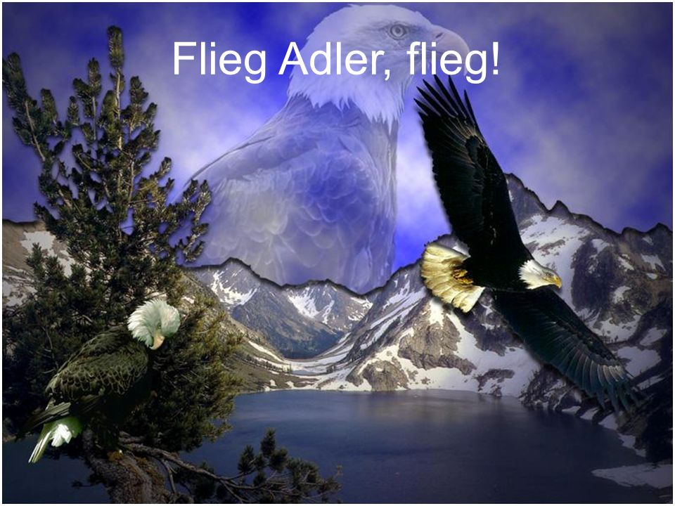Flieg Adler, flieg!