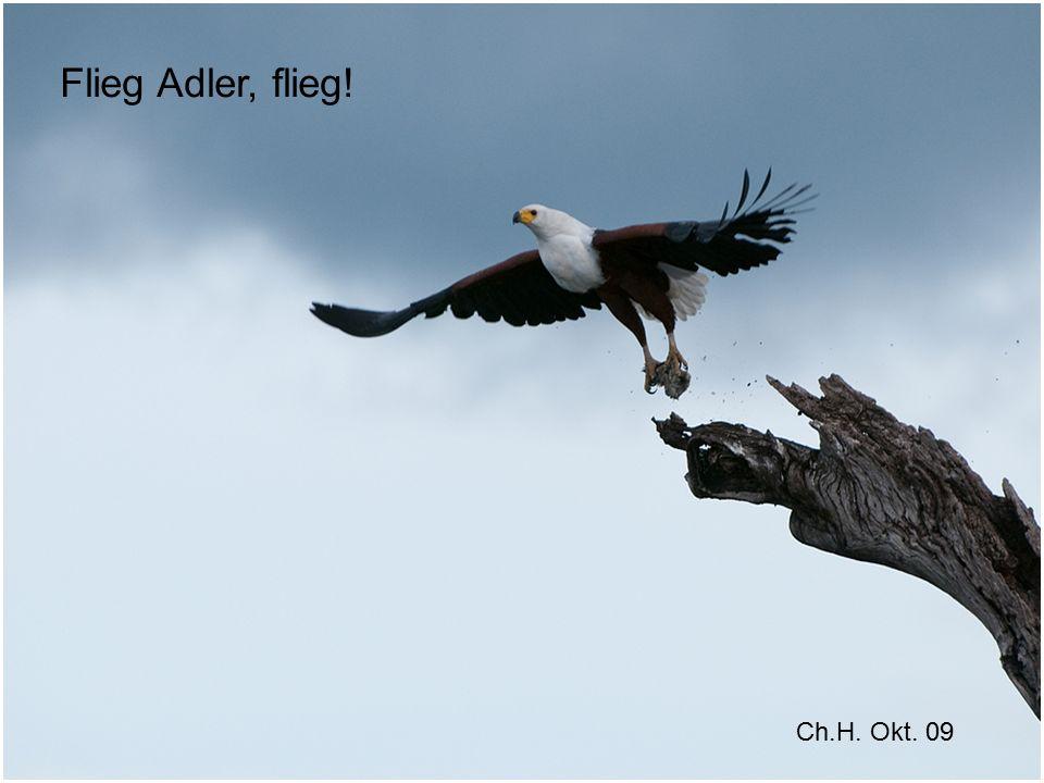 Flieg Adler, flieg! Ch.H. Okt. 09