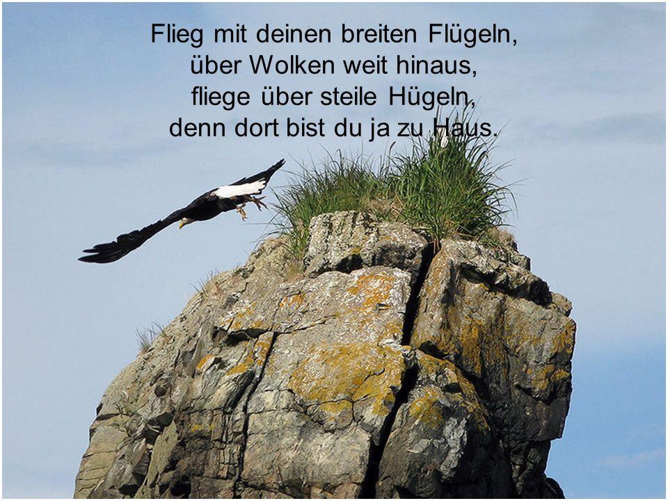 Flieg mit deinen breiten Flügeln, über Wolken weit hinaus,