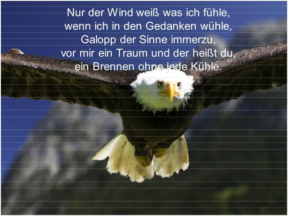 Nur der Wind weiß was ich fühle, wenn ich in den Gedanken wühle,