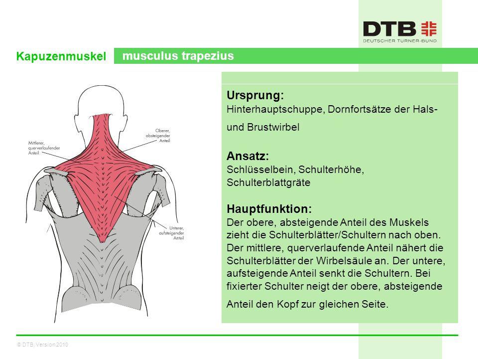 Kapuzenmuskel musculus trapezius Ursprung: Ansatz: Hauptfunktion: