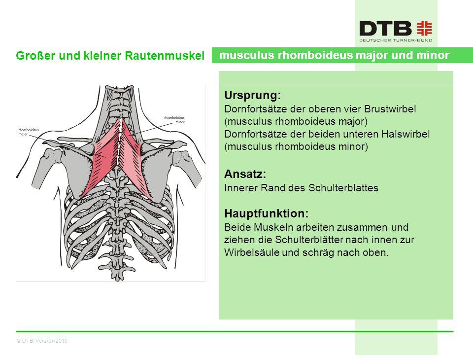 Großer und kleiner Rautenmuskel musculus rhomboideus major und minor