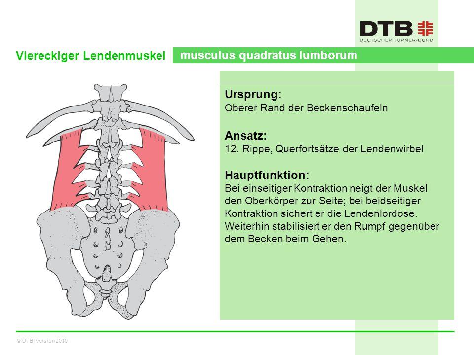 Viereckiger Lendenmuskel musculus quadratus lumborum