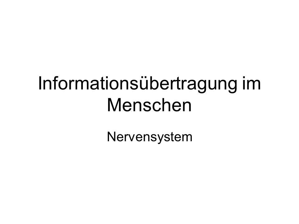 Informationsübertragung im Menschen