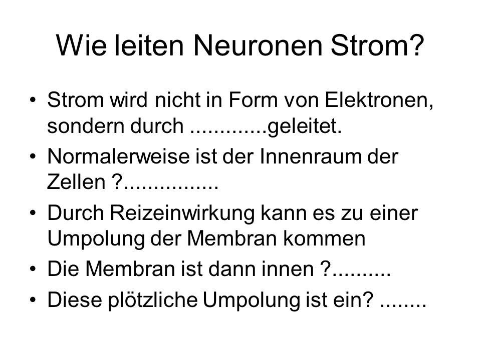 Wie leiten Neuronen Strom