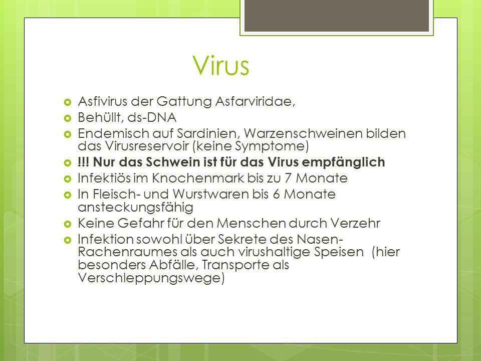Virus Asfivirus der Gattung Asfarviridae, Behüllt, ds-DNA