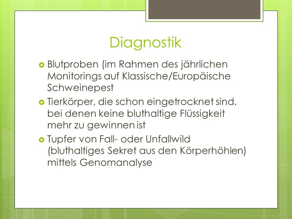 Diagnostik Blutproben (im Rahmen des jährlichen Monitorings auf Klassische/Europäische Schweinepest.