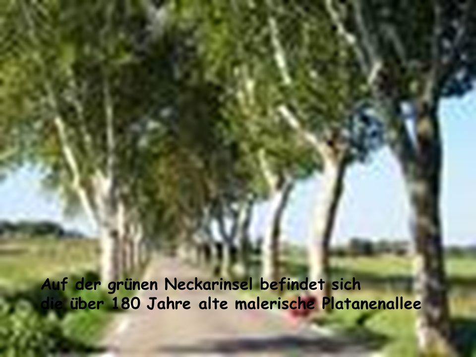 Auf der grünen Neckarinsel befindet sich